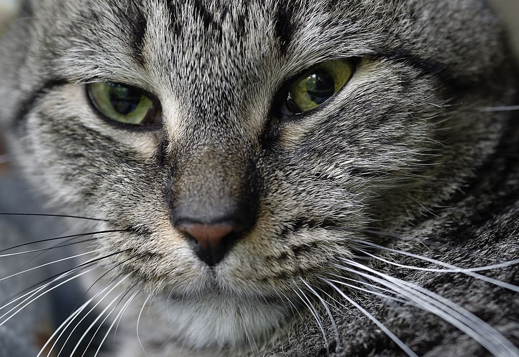 This app takes cats' selfies and sends them to you, which sounds too beautiful for words