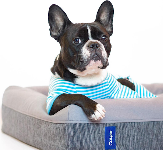 Holiday gifts for the most important being in your life, aka your dog