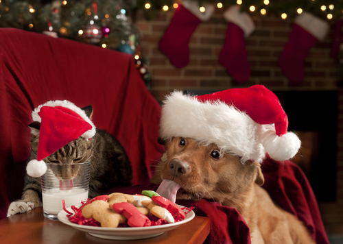 These cats and dogs picking out presents underneath a Christmas tree at an animal shelter are what holiday dreams are made of