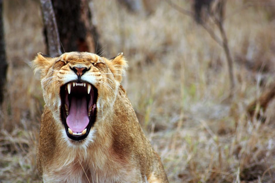 """This video of the """"Planet Earth II"""" animals screaming like humans is genius"""