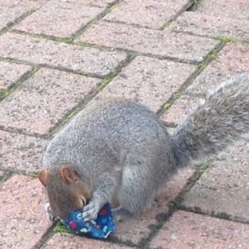 This adorable dad wrapped Christmas presents for squirrels and it will bring hope back into your heart