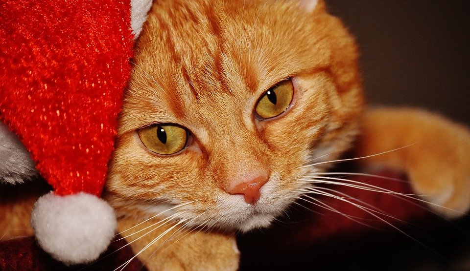 This video of a stealthy Christmas cat is totally cracking us up