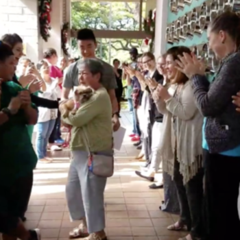 A shelter just threw the most amazing farewell party for an adopted dog and, okay, we're crying