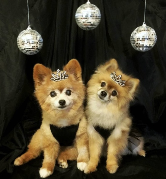 11 dogs that rang in the new year like the queens and kings of the world they are