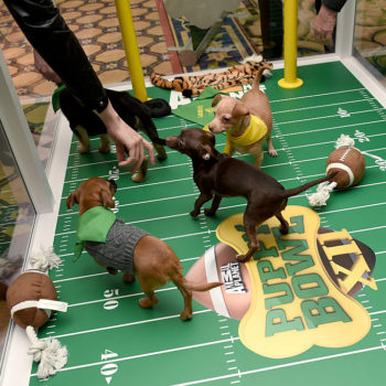 Here are the adorable dogs featured in this year's Puppy Bowl, because this is something you need to know
