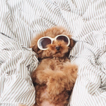 This Instagram famous puppy is so trendy in all the ways
