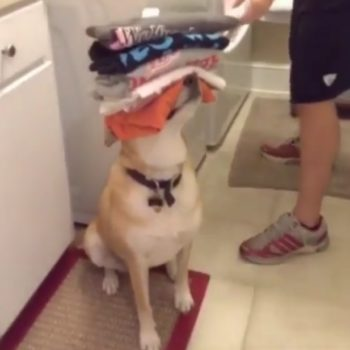 """We're obsessed with this Reddit video of """"the most helpful dog in the world"""""""