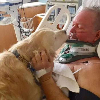 This dog saved her owner's life with the power of cuddles and we're weeping