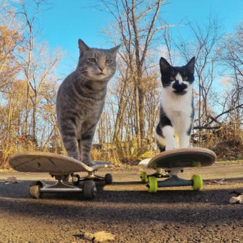 This cat and his dedicated squad of dog minions is officially taking the best selfies in the game