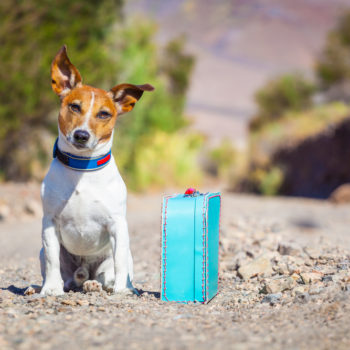 7 super important travel tips for traveling with your dog in 2017