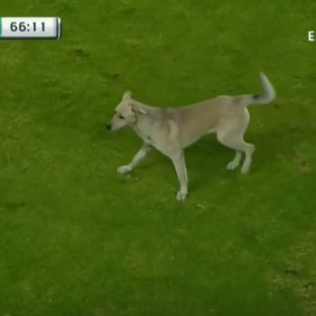 This funny video of a dog and cat interrupting a soccer match is a must-watch