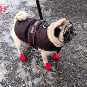 11 dogs that are seriously *done* with winter and can't wait for it to be over