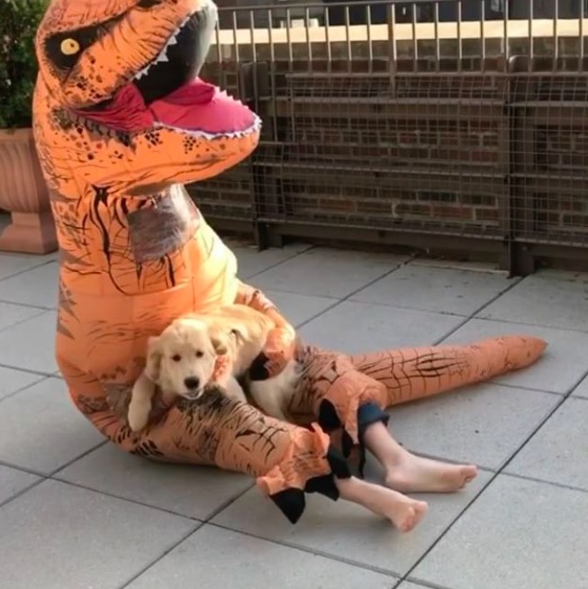 Watching this dog and T-Rex become best friends is basically self-care