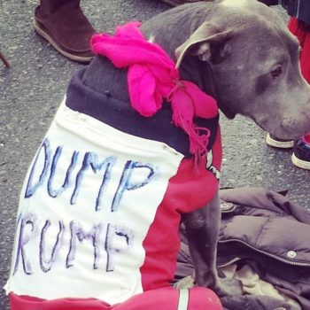These dog protesters at the Women's March are our ultimate heroes, and their signs are literally fetch