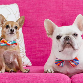 Our favorite affordable decor brand, Oh Joy!, is releasing an accessory collection for dogs