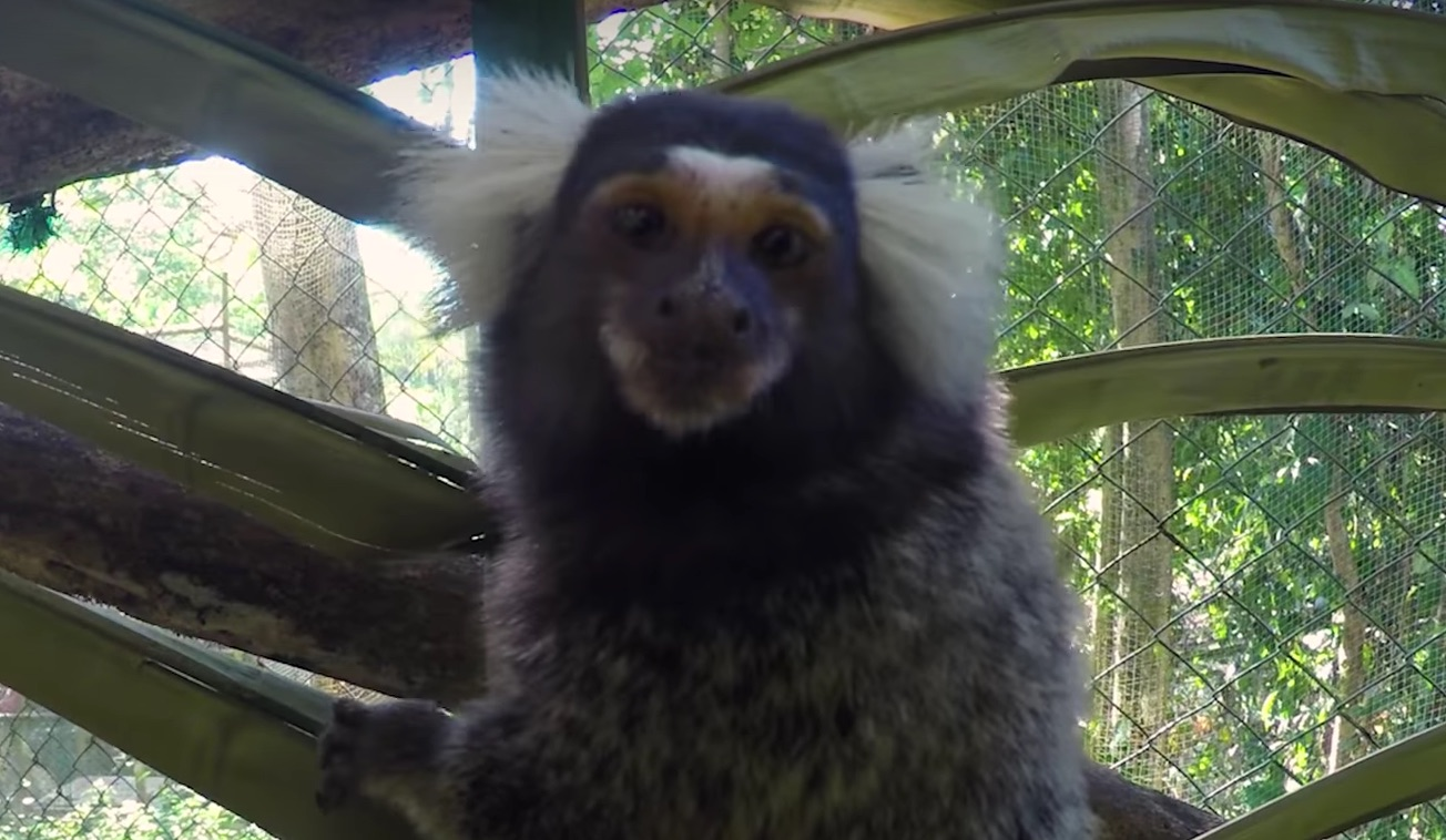 You will need to instantly watch this video of tiny monkeys eating marshmallows