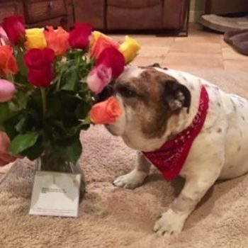 This dad sent his dog flowers because he was injured, so true love really does exist