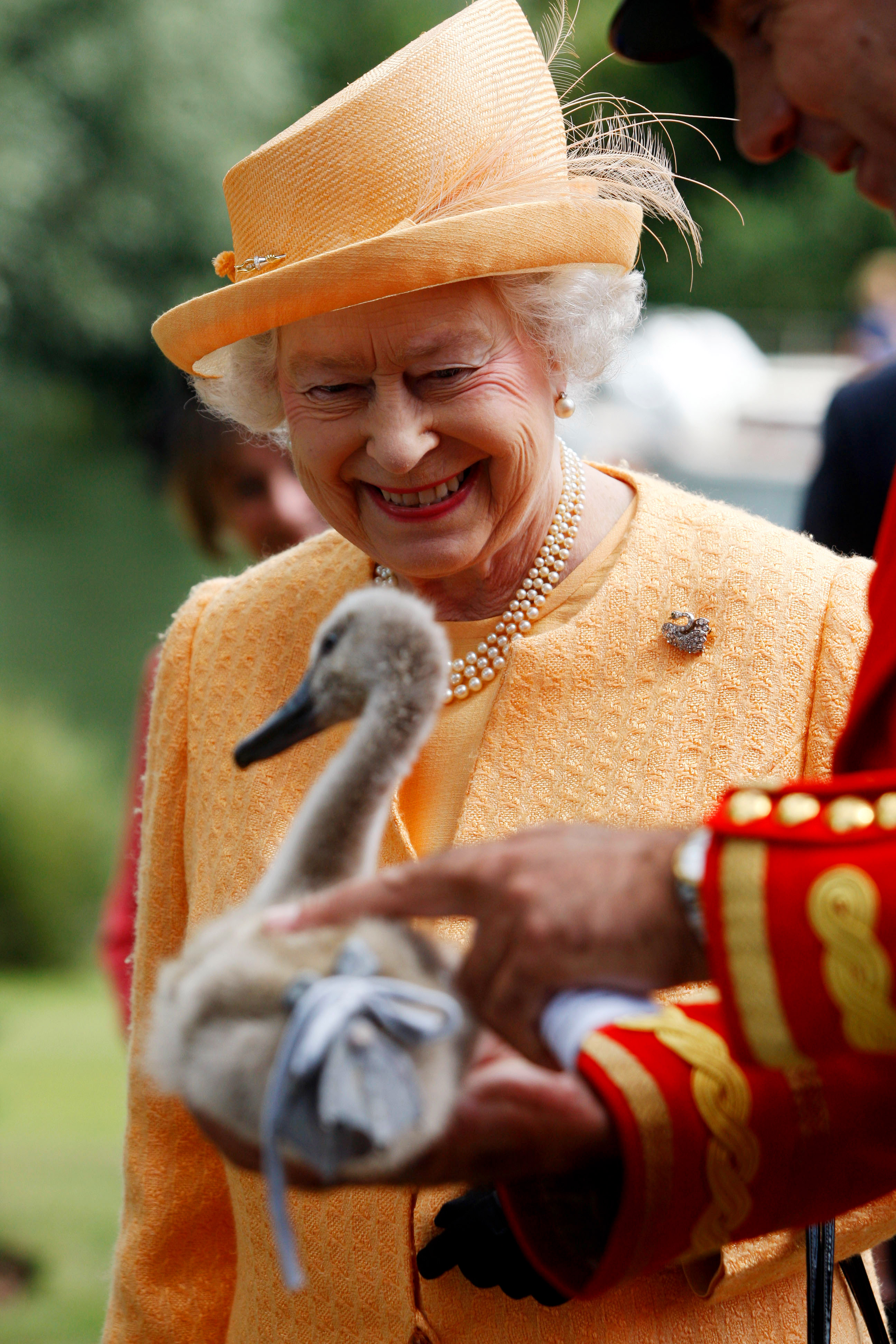 Today in weird royal news: someone is after Queen Elizabeth's swans