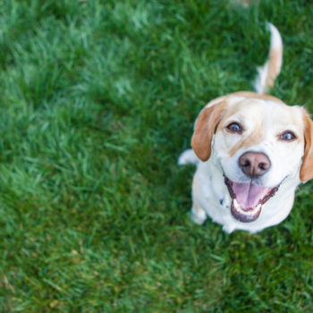 A new study shows super sensitive people read more into dog faces than others