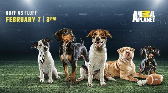 Here are videos of very good dogs from the Puppy Bowl, which is all that matters today