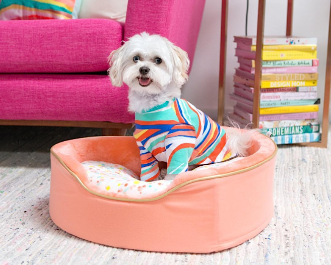 Oh Joy! teased more pieces for their upcoming dog accessory collection at Target