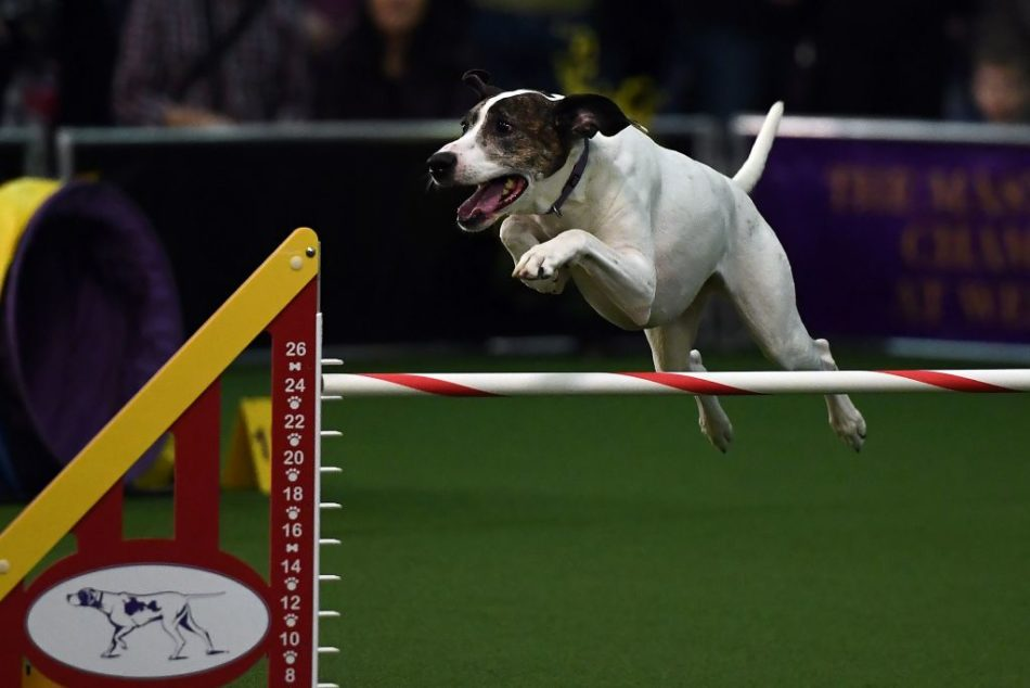 You could win $1 million for picking the winners of the Westminster Dog Show, but how can anyone choose?