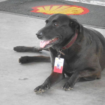 This dog was abandoned at a gas station, so they gave him a job