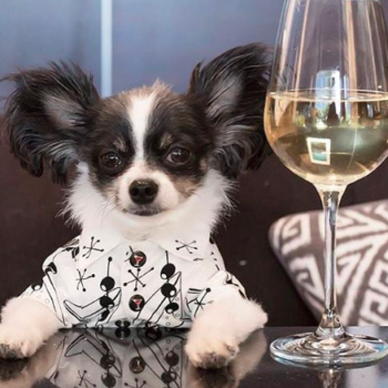 The best pet-friendly hotels for you and your non-human BFF