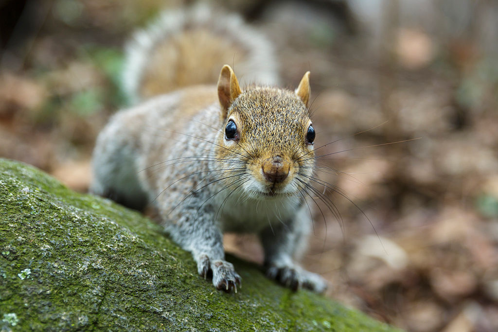 This man's pet squirrel fought off a home burglar, so he's officially the best pet ever