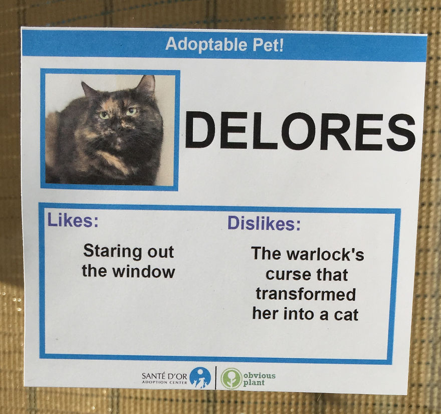 "This guy gave homeless cats hilarious ""likes and dislikes"" to help them get adopted"