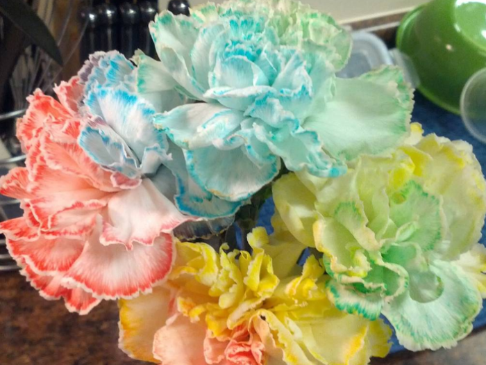 Here 39 s how to use food coloring to change the color of for How to dye flowers using food coloring