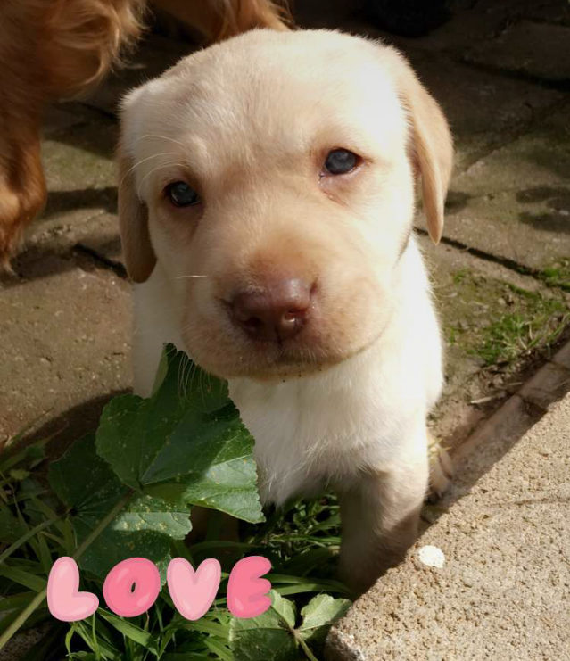 WeRateDogs shared the most pure Snapchat story yesterday, and our hearts are bursting