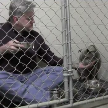 This loving vet ate out of a dog bowl to get a traumatized rescue pup to eat, and tissues please!