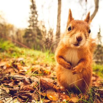 The internet has turned a photo of a squirrel into the heroic meme we need and deserve