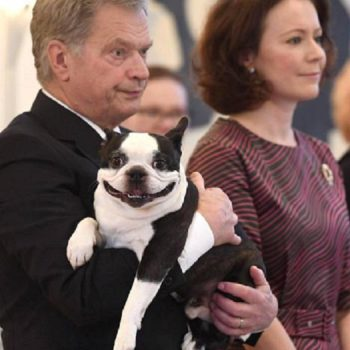We need to talk about the Finnish president's dog Lennu, aka the most insane looking dog on the planet