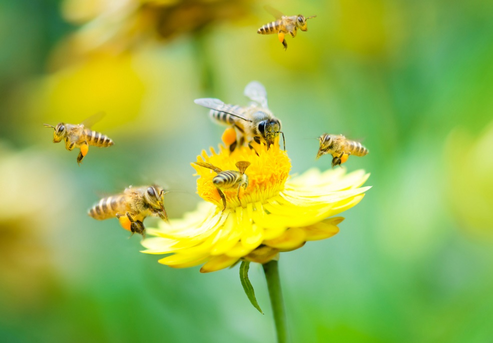 These scientists taught bees to play football, and what is this life?!