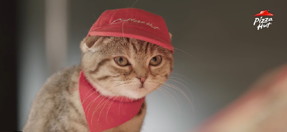 Pizza Hut Japan's all-cat staff is back on the job and totally killing it