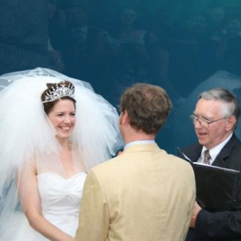 A whale lowkey photobombed this bride and groom in the greatest wedding picture you will ever see