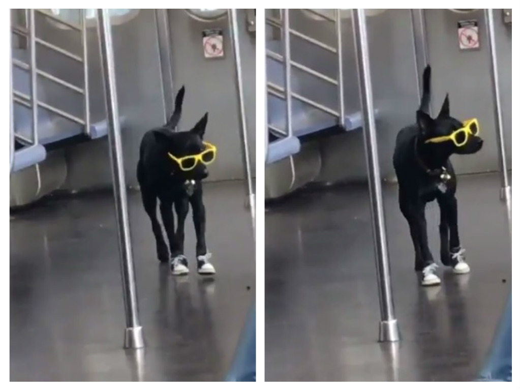 This dog wearing sunnies and shoes in the subway is literally the coolest canine ever