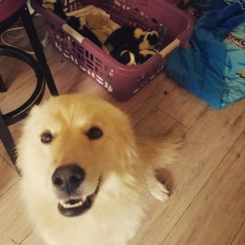 This sweet dog got a second chance at being a mom with orphaned puppies and, yes, of course we're sobbing