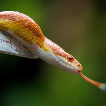 This very real snake that looks like it's covered in emojis is curing our fears