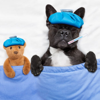 This will be ruff to hear, but dogs can get canine flu–here's how to keep your furry BFF safe