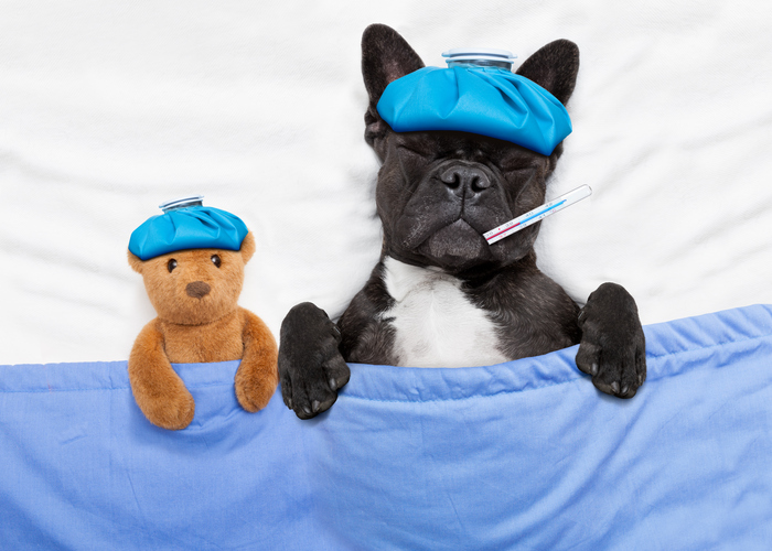 This will be ruff to hear, but dogs can get canine flu--here's how to keep your furry BFF safe