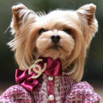 The tiny Paris Fashion Week dog is back, and *still* more stylish than we could ever hope to be