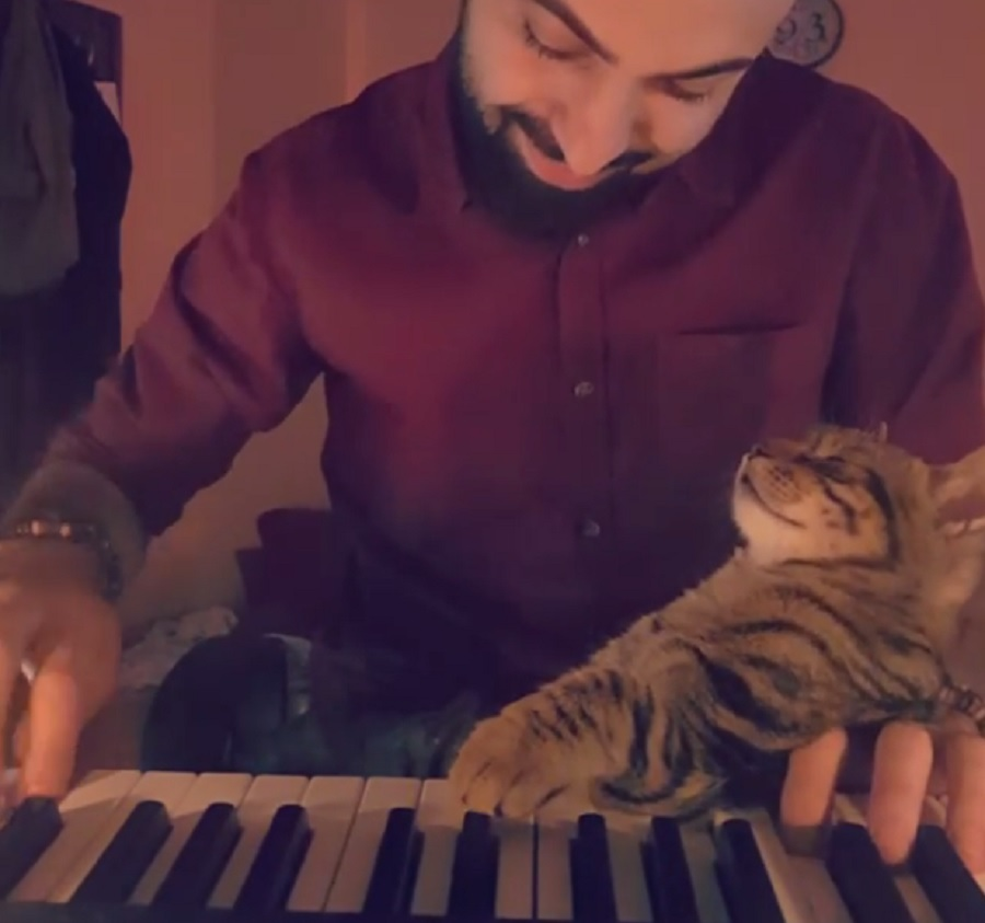 This cat seriously loves hearing its human play the piano