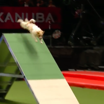 This dog totally failed a dog show, and we totally feel his pain