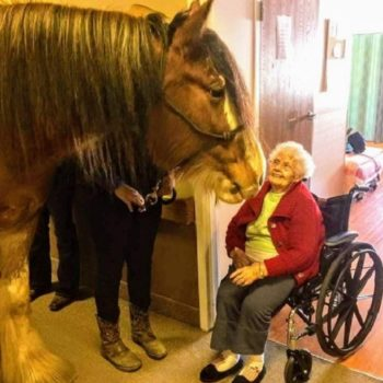 This giant horse was just casually hanging out at a nursing home, being the chillest buddy ever