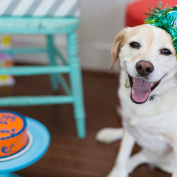 This dog's reaction to her birthday cake is all of us when we're craving sweets