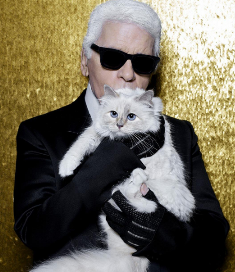 Karl Lagerfeld's high-fashion cat, Choupette, is the latest victim of Instagram hacking