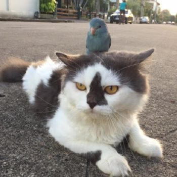 Here's a bird riding on a cat's back, because that's what friends are for